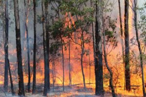 Trees burning in bushfire