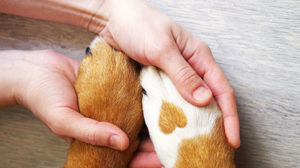 Get the most from your pet insurance